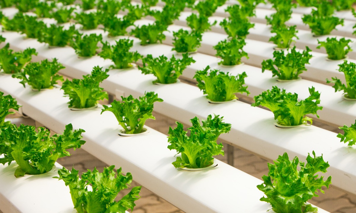 Five sustainable food investment trends to watch